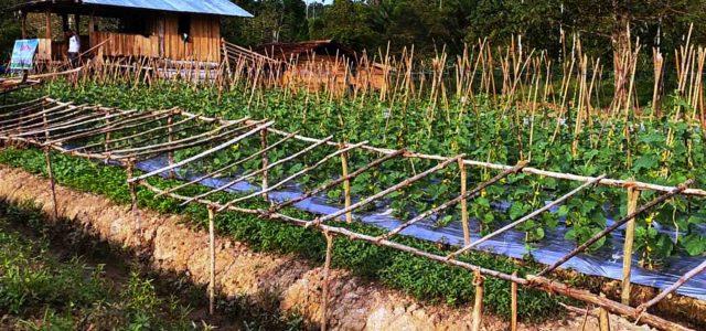 Kebun Asimilasi, Wujud Program Lapas Sorong untuk Warga Binaan Pemasyarakatan