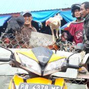 Feature: Melintas Puluhan Kilometer, Rafael Jajakan Ayam Kampung Hingga ke Pasar Wosi Manokwari