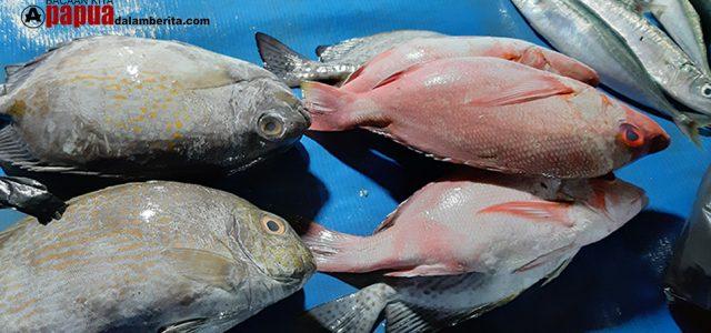 WAJAH MANOKWARI: Malam Hari Pasar Borobudur, Ada Ikan Segar