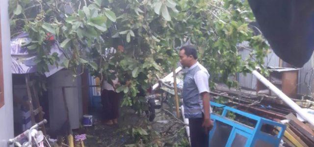 Hujan Angin Kencang, Pohon Tumbang Timpa Rumah Warga Sowi Manokwari , 3 Orang Luka-Luka