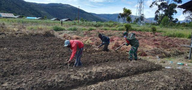 Sukseskan Swasembada Pangan Babinsa Koramil Anggi Bantu Warga Tanam Sayuran