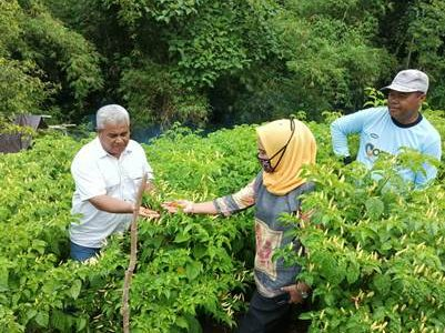 Jelang Idul Fitri 1442 H, Dinas Pertanian dan KP Pastikan 80 Persen Ketersedian Cabe dan Sayur Lokal Aman