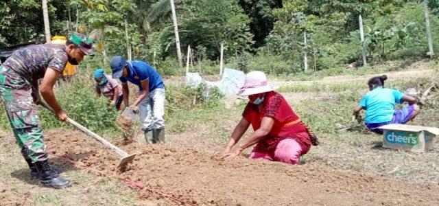 Di Masa Pandemi Covid-19 Kodim Fakfak Sulap Lahan Tidur Jadi Kebun Sayuran